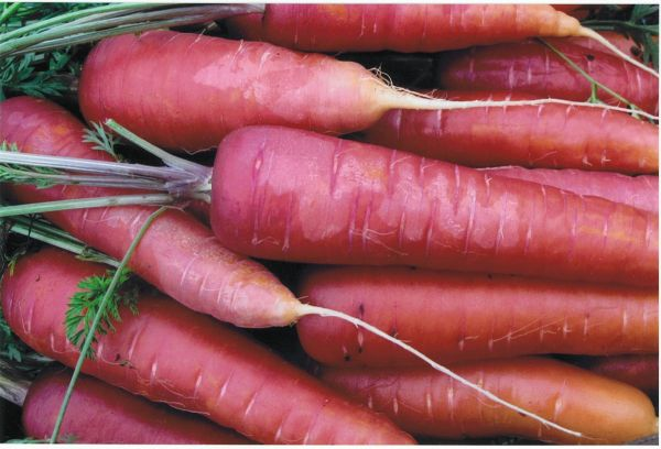 Carrots2C20rouge20sang20violette.jpg