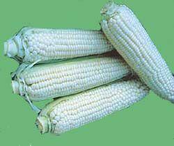 Corn-Stowells20Evergreen.jpg