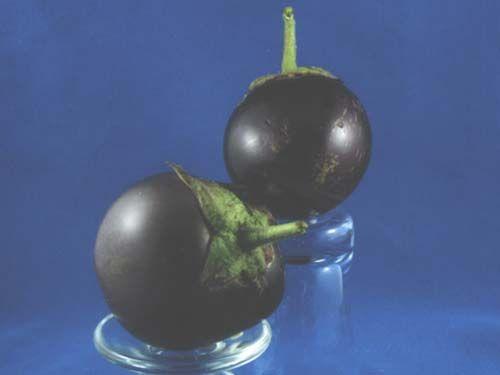 Eggplant2C20Morden20Midget.jpg