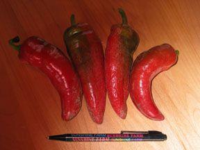 Pepper2C20Pizza.jpg