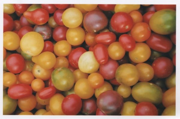 Tomato20Pic.jpg