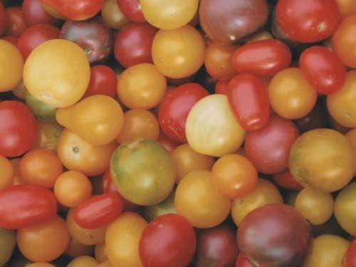 Tomato20Pic20for20website28229.jpg