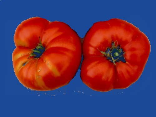 Tomato2C20Amish20Brandywine.jpg