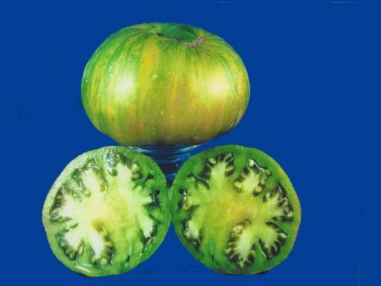 Tomato2C20Big20Zebra.jpg