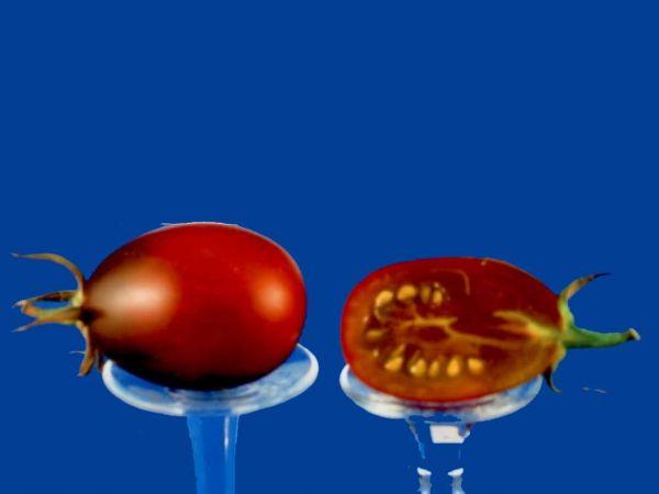 Tomato2C20Black20Plum.jpg