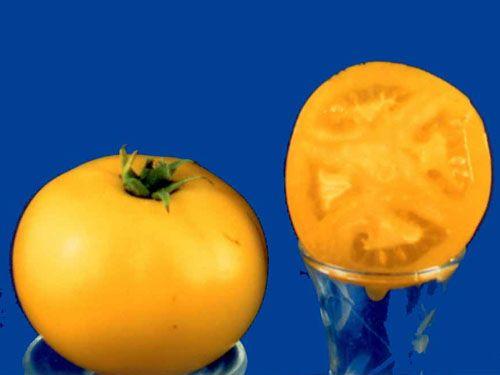 Tomato2C20Blanche20du20Quebec28229.jpg