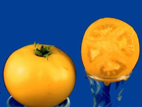 Tomato2C20Blanche20du20Quebec2822928229.jpg