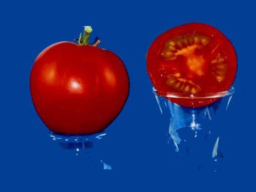 Tomato2C20Earliana28229.jpg