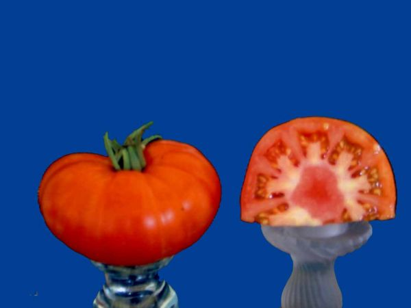 Tomato2C20Fiorentino.jpg