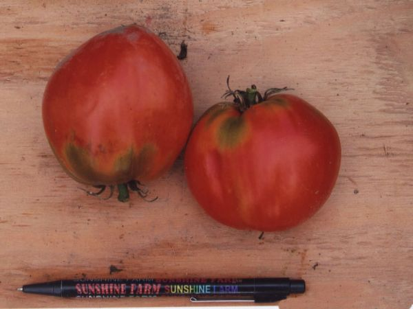 Tomato2C20Freds20Italian20Plum.jpg