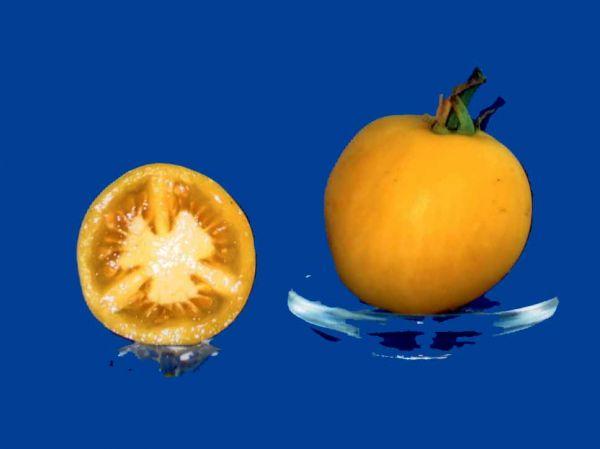 Tomato2C20Grape20Ghost.jpg