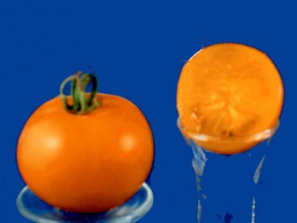 Tomato2C20Morden20Yellow.jpg