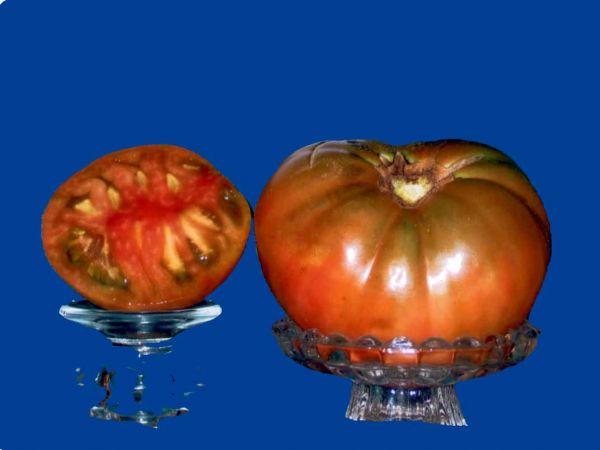 Tomato2C20Purple20Cherokee.jpg