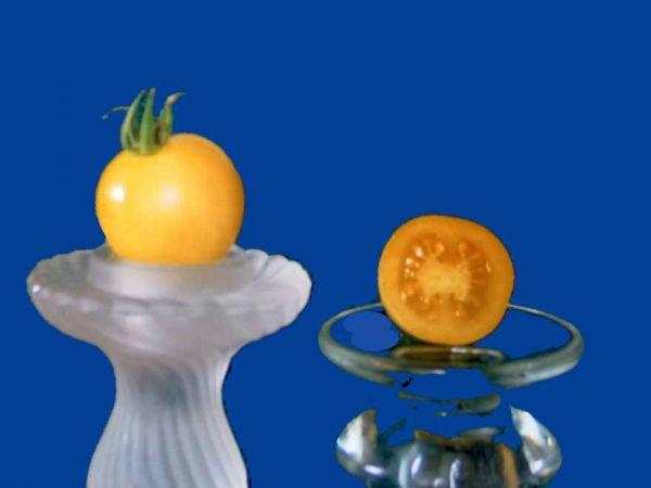 Tomato2C20Snow20White.jpg