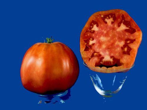 Tomato2C20Sorrento28229.jpg