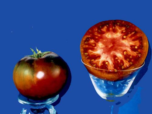 Tomato2C20Southern20nights.jpg