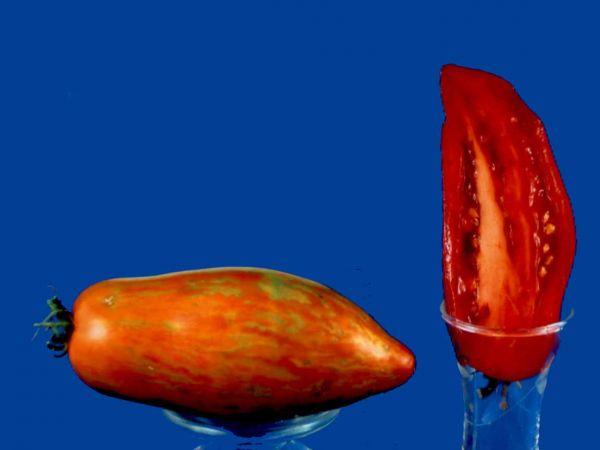 Tomato2C20Speckled20Roman.jpg