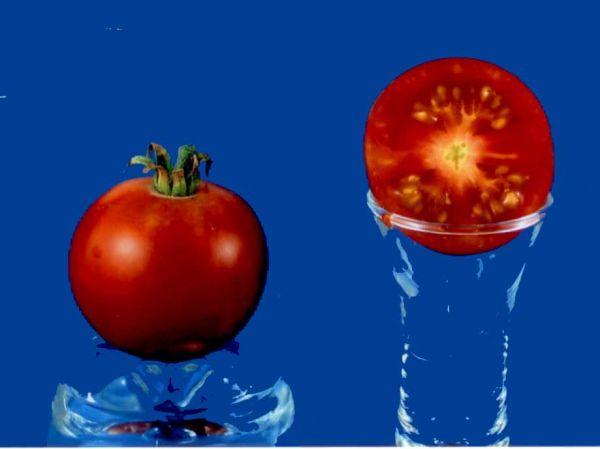 Tomato2C20Stupice.jpg