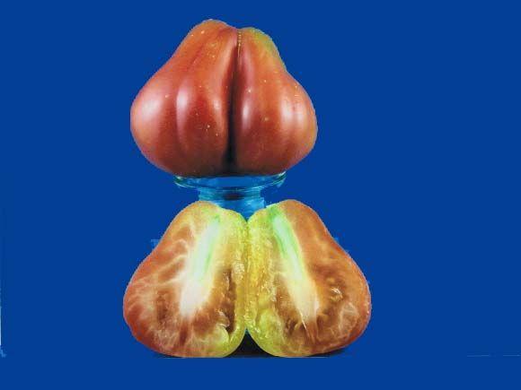 Tomato2C20Tlacolula.jpg