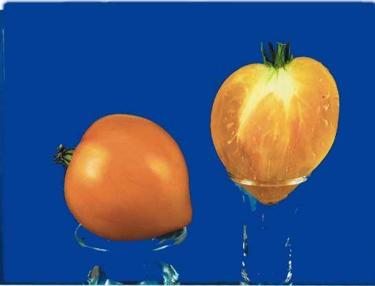 Tomato2C20anna20banana20russian.jpg
