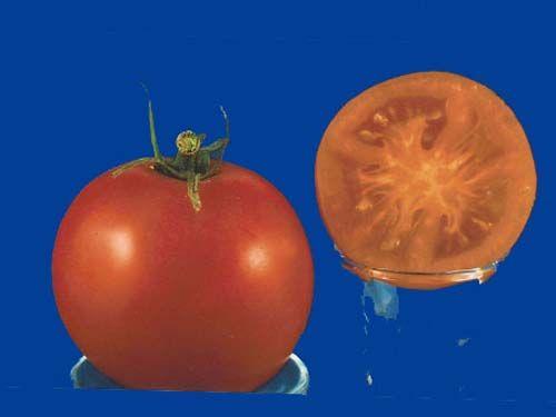 Tomato2C20arancia.jpg