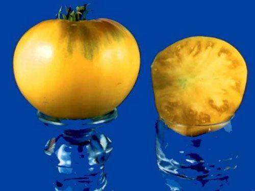 Tomato2C20basinga28229.jpg