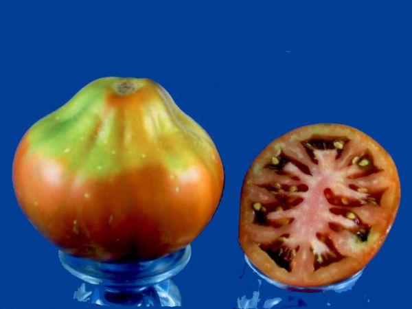 Tomato2C20black20pear.jpg