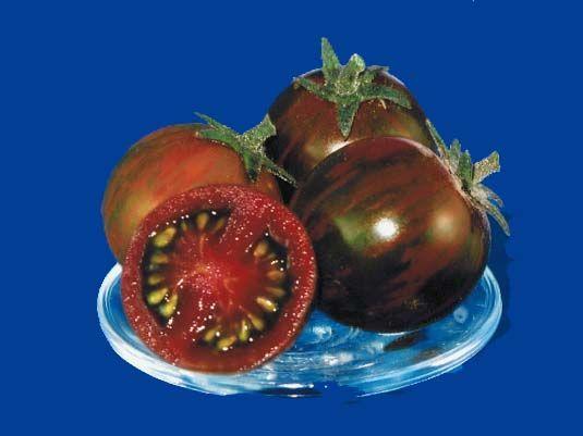 Tomato2C20black20zebra20cherry28229.jpg