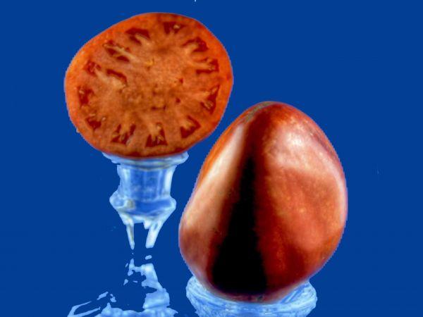 Tomato2C20bulls20heart.jpg