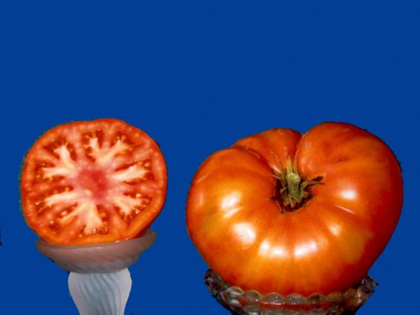 Tomato2C20bush20beefsteak.jpg