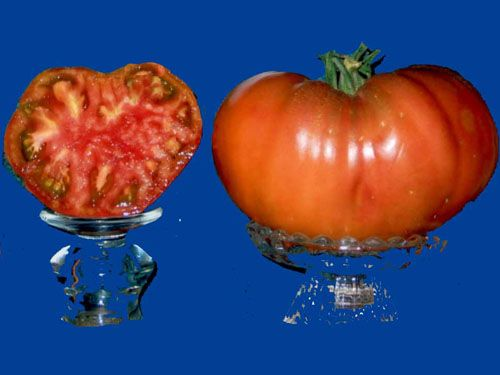Tomato2C20carbon.jpg
