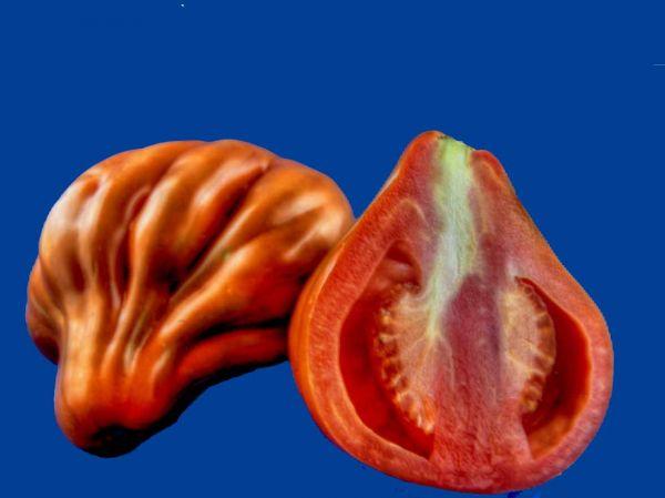 Tomato2C20coeur20de20boeuf.jpg