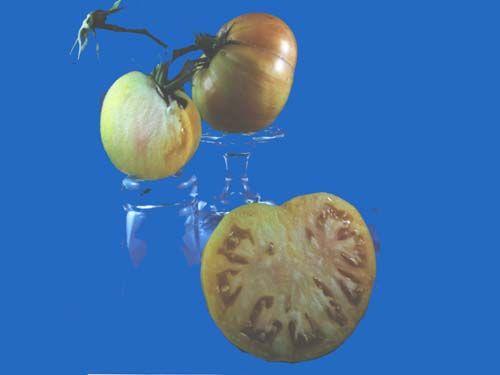 Tomato2C20copia.jpg