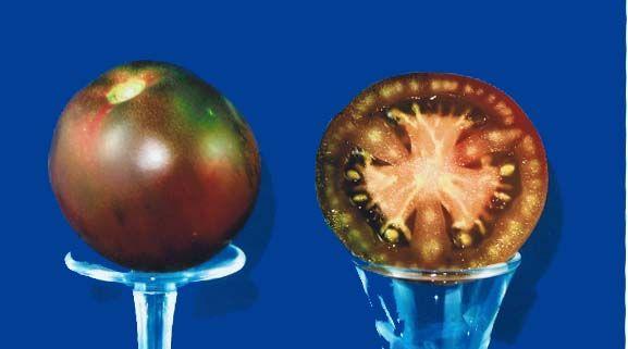 Tomato2C20gypsy.jpg