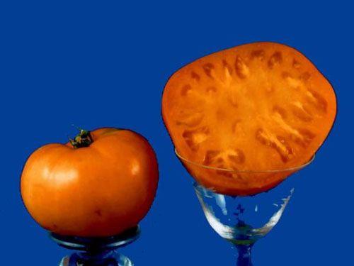Tomato2C20old20wyandotte28229.jpg