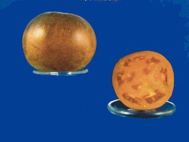 Tomato2C20orange20flesh20purple20smudge28229.jpg