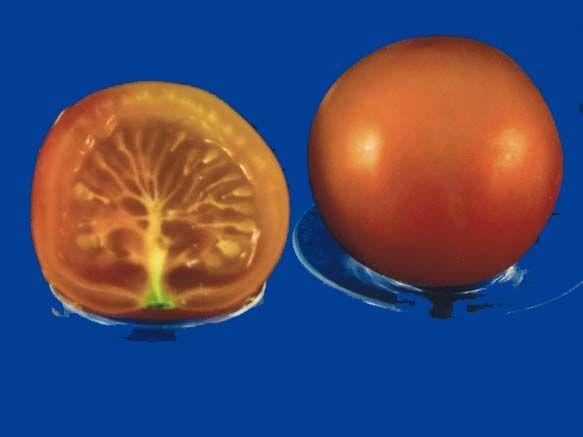 Tomato2C20pineapple20fog.jpg
