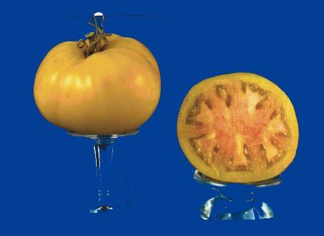 Tomato2C20pink20grapefruit.jpg