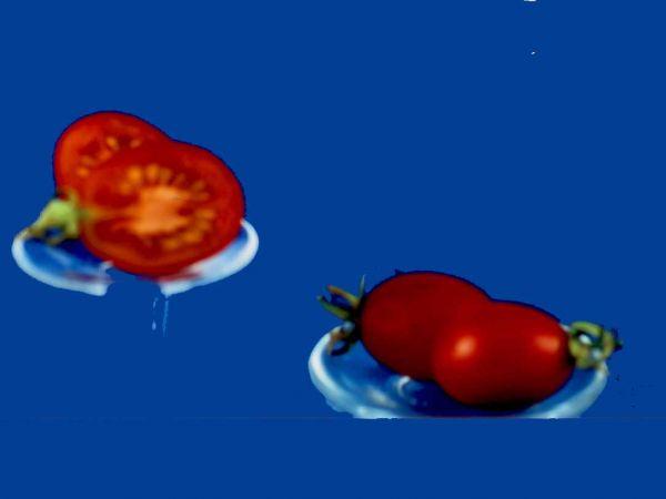 Tomato2C20principe20Borghese.jpg