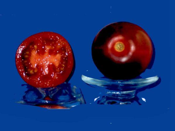 Tomato2C20purple20smudge.jpg