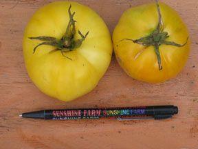 Tomato2C20round20lemon.jpg