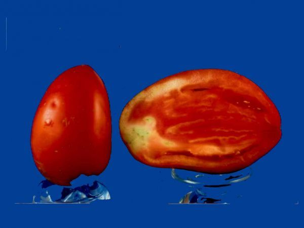 Tomato2C20scinnocca2028129.jpg