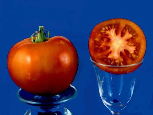 Tomato2C20sugawara28229.jpg