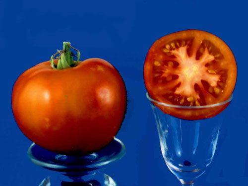 Tomato2C20summerjet.jpg
