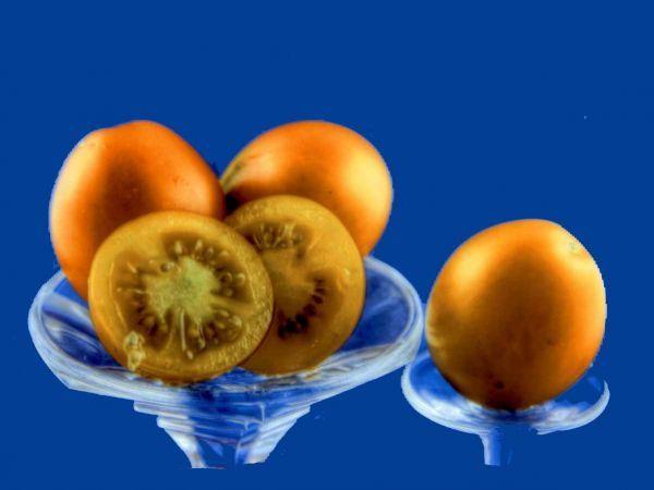 Tomato2C20sunshine20cherry2028229.jpg