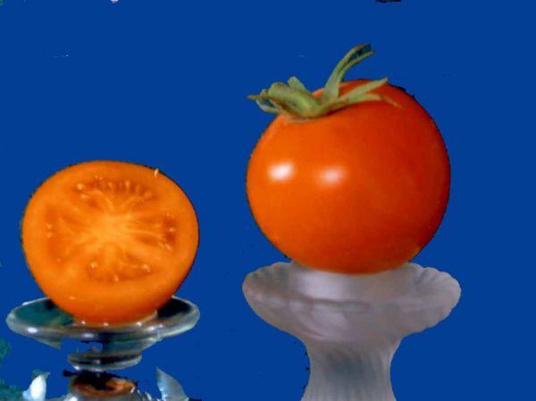 Tomato2C20tangello.jpg