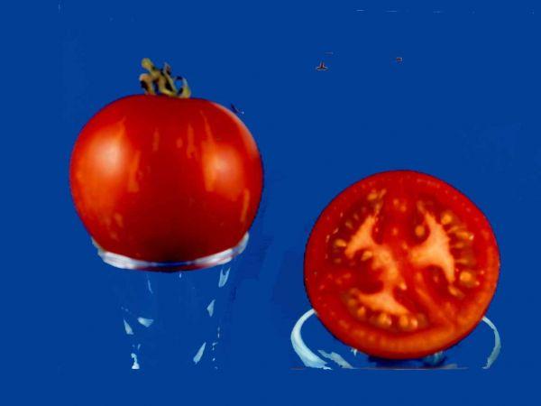 Tomato2C20tiger20tom.jpg