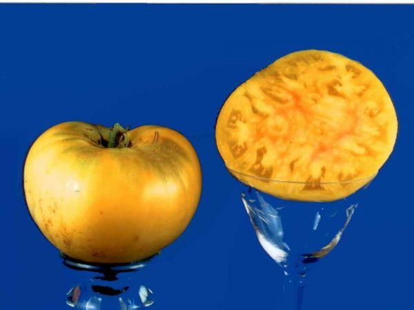 Tomato2C20white20beauty.jpg