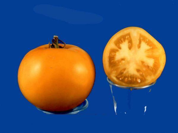 Tomato2C20yellow20taxi2028129.jpg