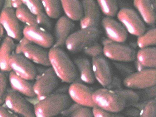 bean_montcalm_red.jpg